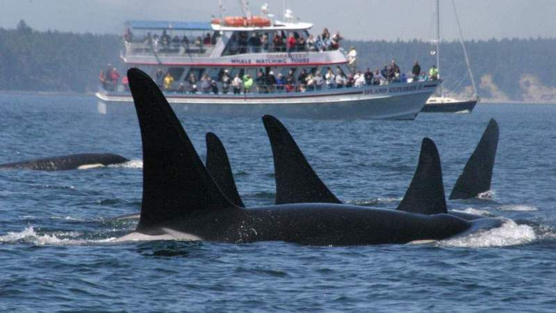 Soon, We'll Have Whale Heritage Sites