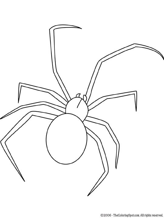 Black Widow Spider Spider Drawing Spider Coloring Page Black Widow Spider