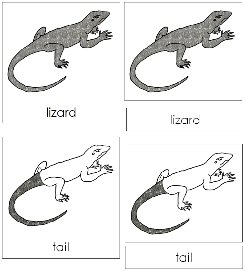 Montessori Homeschool Science//zoology PARTS OF A REPTILE Nomenclature card