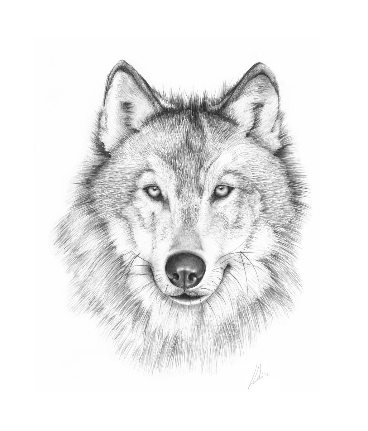 how to draw a wolf head front view