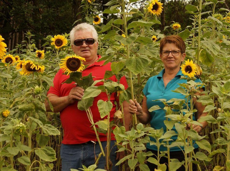 Sonnenblumenverkauf für krebskranke Kinder (mit Bildern