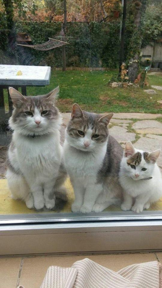 Idee Von Maria Anna Auf Katzen Bilder Baby Katzen Katzen Susse Tiere