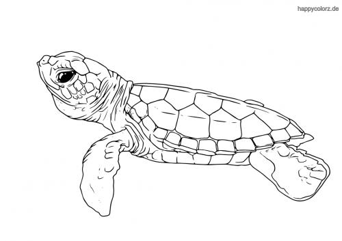 kleine schildkröte ausmalbild in 2020  streichelzoo