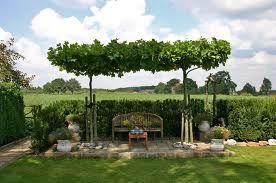 Afbeeldingsresultaat voor catalpa terras schaduw ogrodnictwo