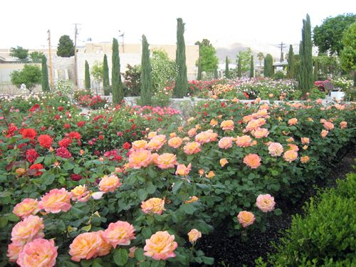 the garden el paso rose garden
