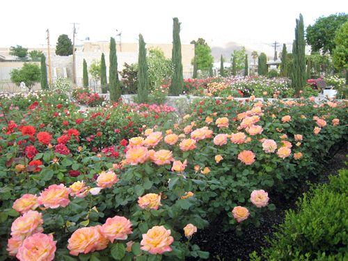 Amazing The Garden El Paso | Rose Garden