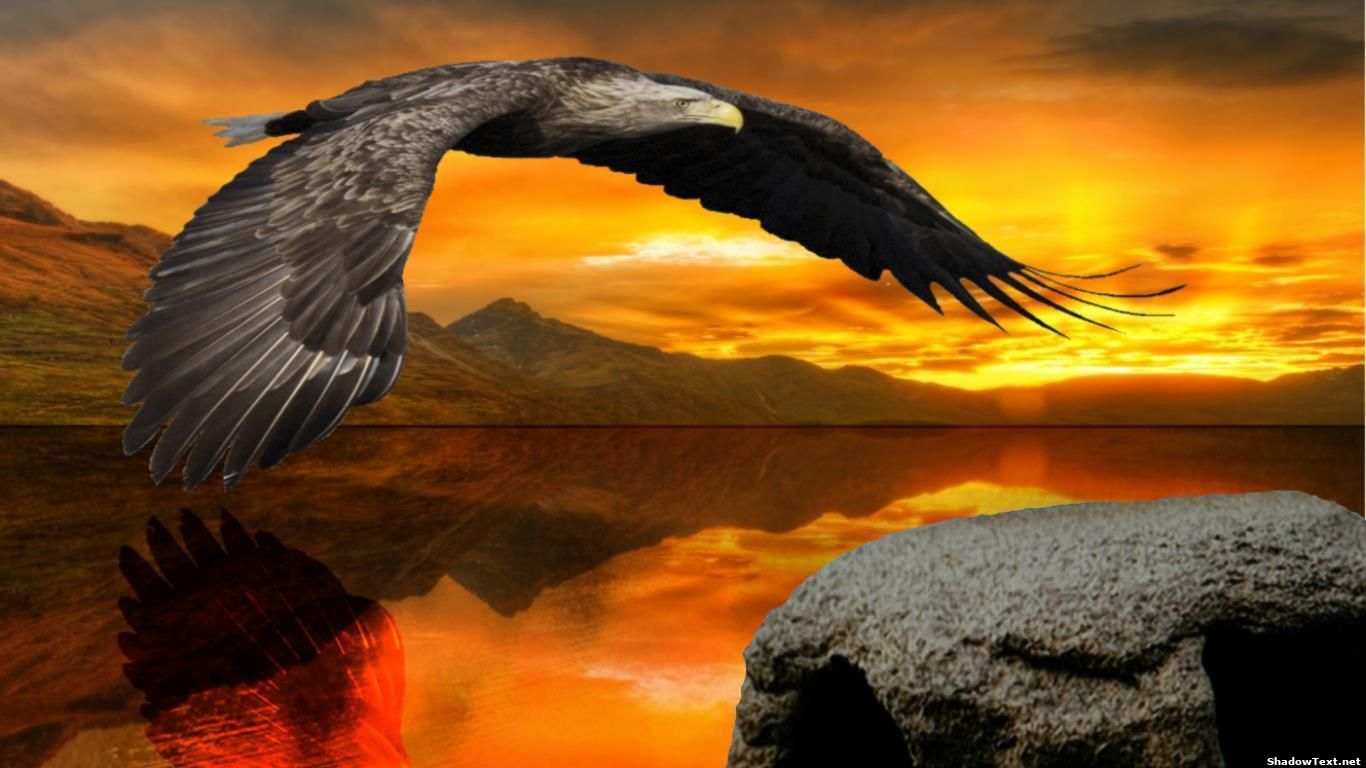 Eagle quoyr | Soaring Eagle Sunset Quote Maker - ShadowText