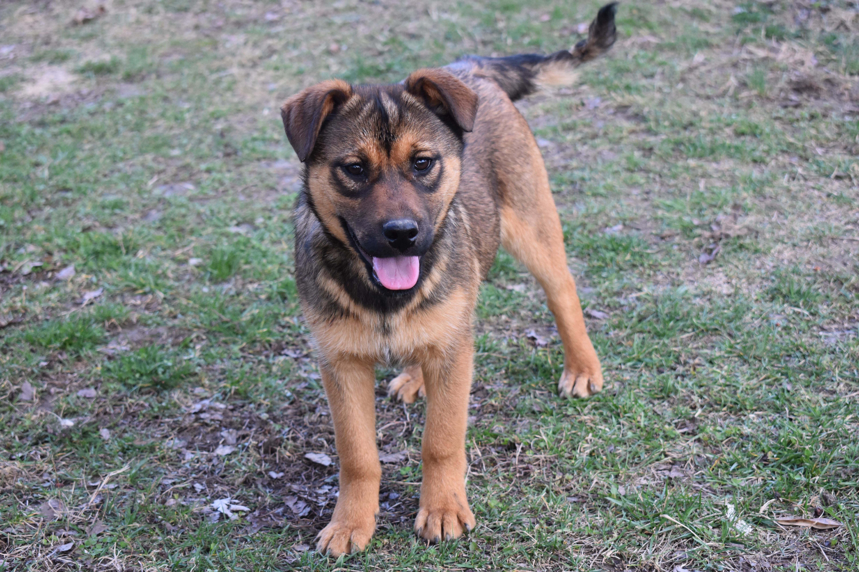 Adopt Nim on (With images) Shepherd dog mix, German