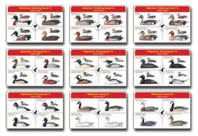 Duck identification field guide freshwater waterfowl ident i cards
