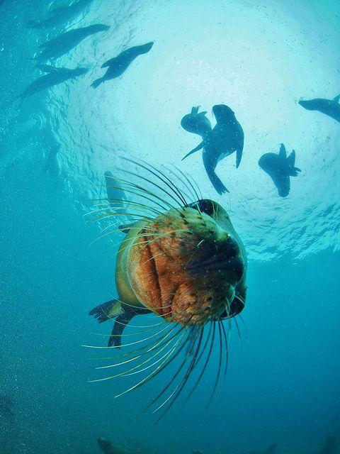 Sea Lions at Sea Lion Beach | Flickr - Photo Sharing!