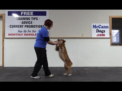 Youtube Dog Clicker Training Teach Dog To Come Agility Training For Dogs