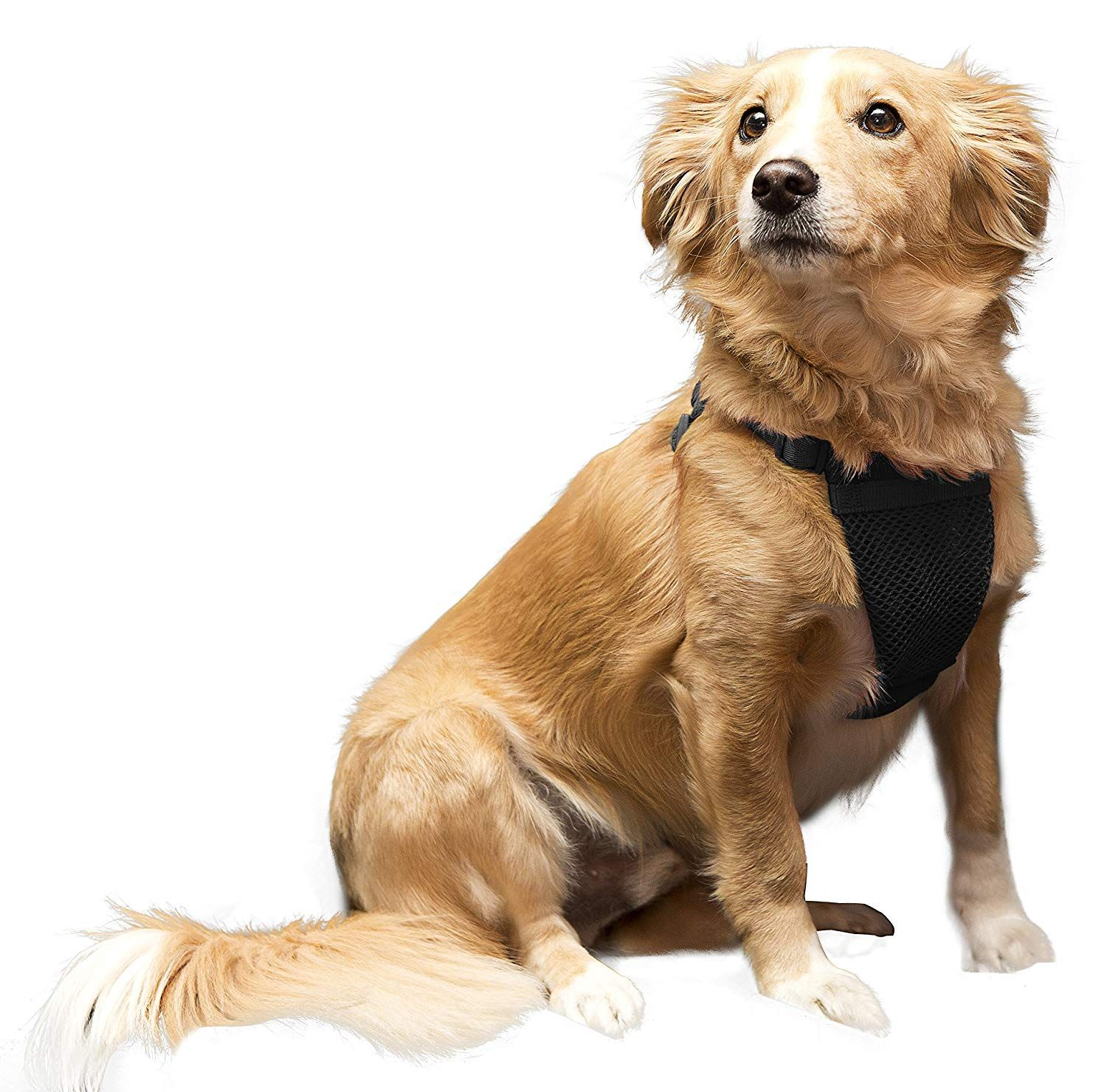 Yup Comfort Harness For Dogs Medium Black Want Additional