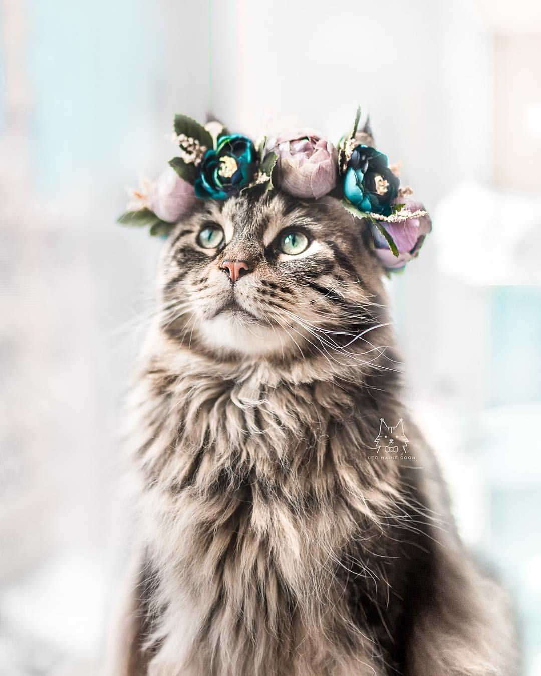 cat clothes cat clothes for cats cat accessories cat collar cat supplies cat lover gifts pet flower crown Maroon Cat Flower Crown