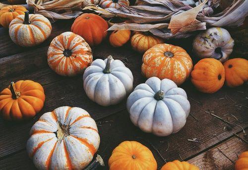 We Heart It에 올린 Pumpkin Love - http://weheartit.com/entry/206670888