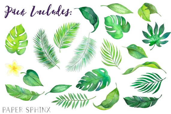 Watercolor Tropical Leaves Clipart | Palm Leaves Clipart - Summer ...