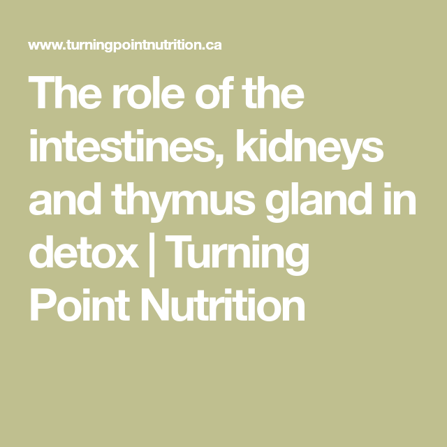 The Role Of The Intestines Kidneys And Thymus Gland In Detox