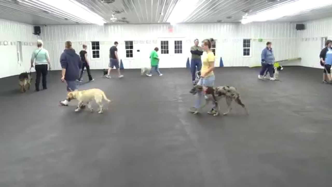 World Class Dog Kennels Dog Training Mchenry Il Bambi S