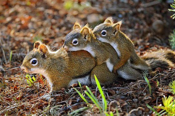 Pin By Cecilia O Connor On Cute Squirrel Funny Animal Pictures Funny Animals Animals