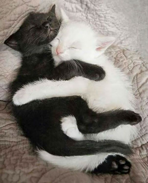 15 Wonderful Photos of Black and White Cats Living in Harmony -  15 Wonderful Photos of Black and White Cats Living in Harmony  - #bdaygiftsforhim #birthdaygiftsforhim #Black #Cats #cuteanimals #gratitudegifts #Harmony #homemadegifts #Living #Photos #White #Wonderful #xmasgifts