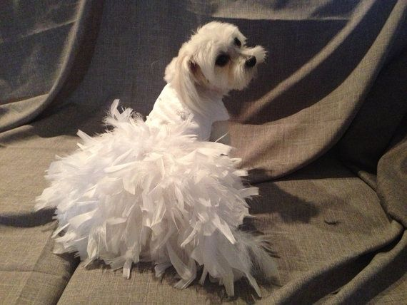 Wedding Dog Dress White Or Ivory Dog Wedding Dress Dog