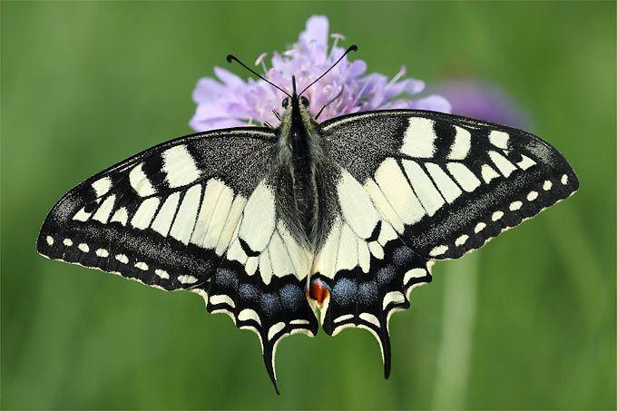 Ein Garten Fur Schmetterlinge Nabu Insekten Schwalbenschwanz Und Vogel Des Jahres