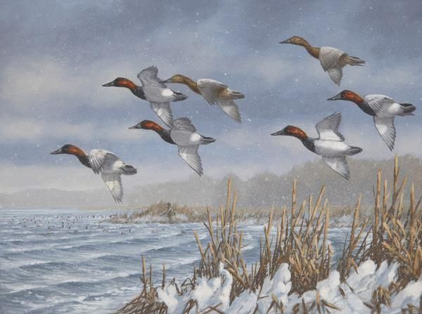 Armistice Day Hunt Canvasbacks Limited Edition Print by Michael Sieve