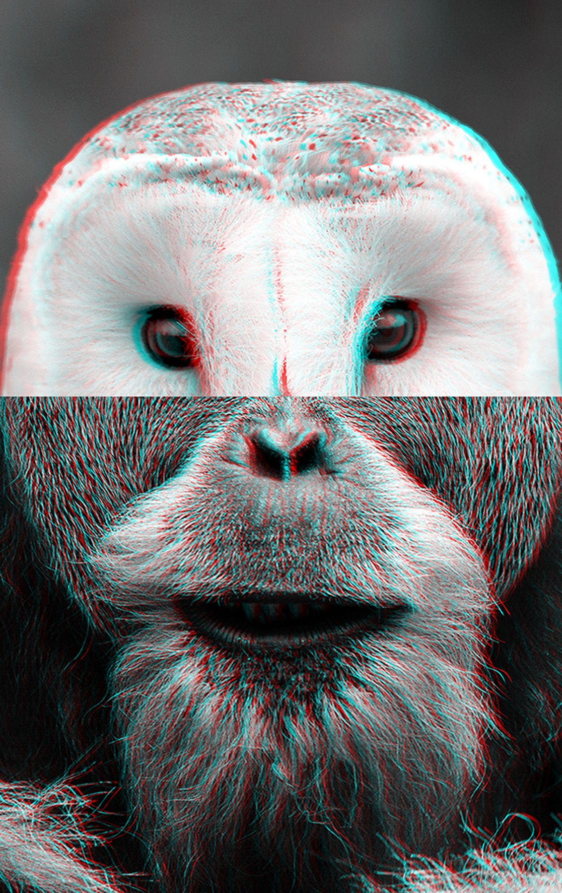 Photomontage: Ulf Rehnholm #everythingisconnected #ulfrehnholm #rehnholm #photoart #blackandwhite #photography #stereo #anaglyph  #anaglyph3d #owl #gorilla