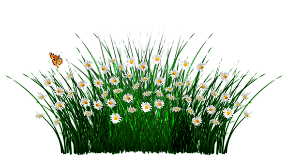 Spring Flowers Grass Meadow Daisy Image Flowers Spring Flowers
