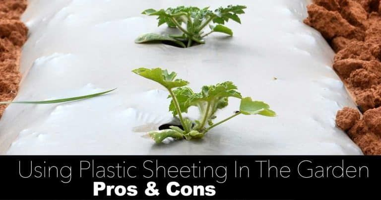How To Use Plastic Sheeting And Plastic Mulch In The Garden Pros