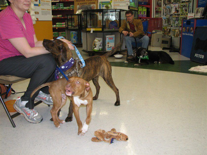 Snickers & Douglas Doodle (With images) Petco, Event