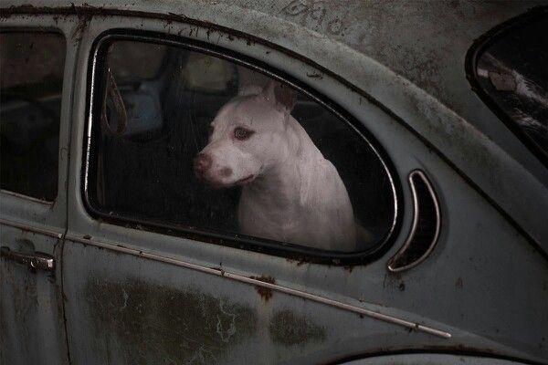 Martin Usborne.  Silence of dogs in cars.