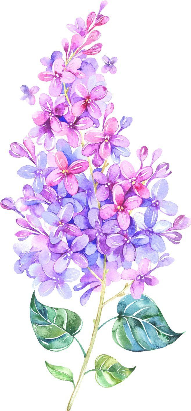 This Vibrance Lilac Tattoo Watercolor Plants Flower Art