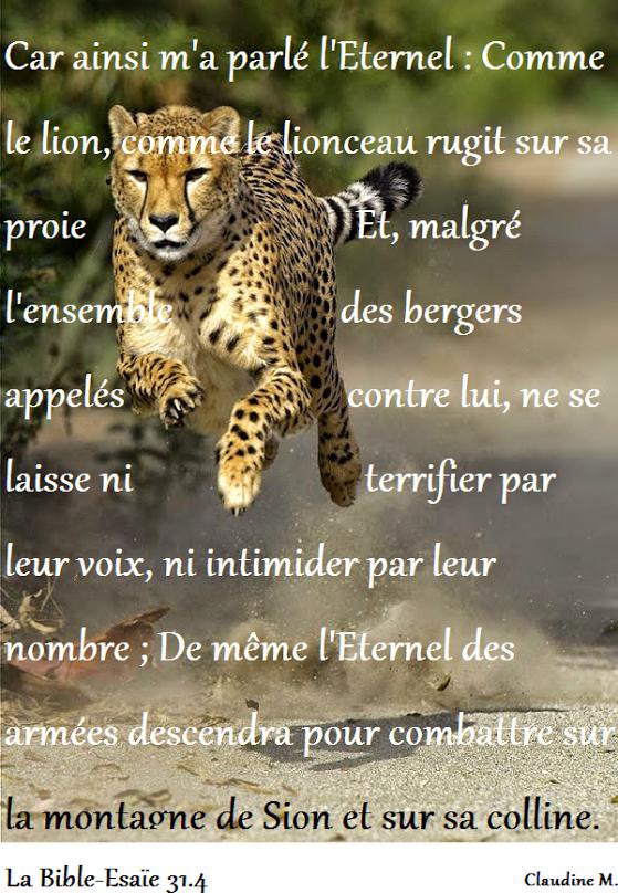 L'Éternel seul délivre les siens, les protège, les épargne et les sauve en déployant Sa puissance. L'Éternel sera au milieu des nations comme un lion au milieu des bergers....                                   *  *  *                  B O N N E    M A T I N E E ♥  Claudine Michau - Google+