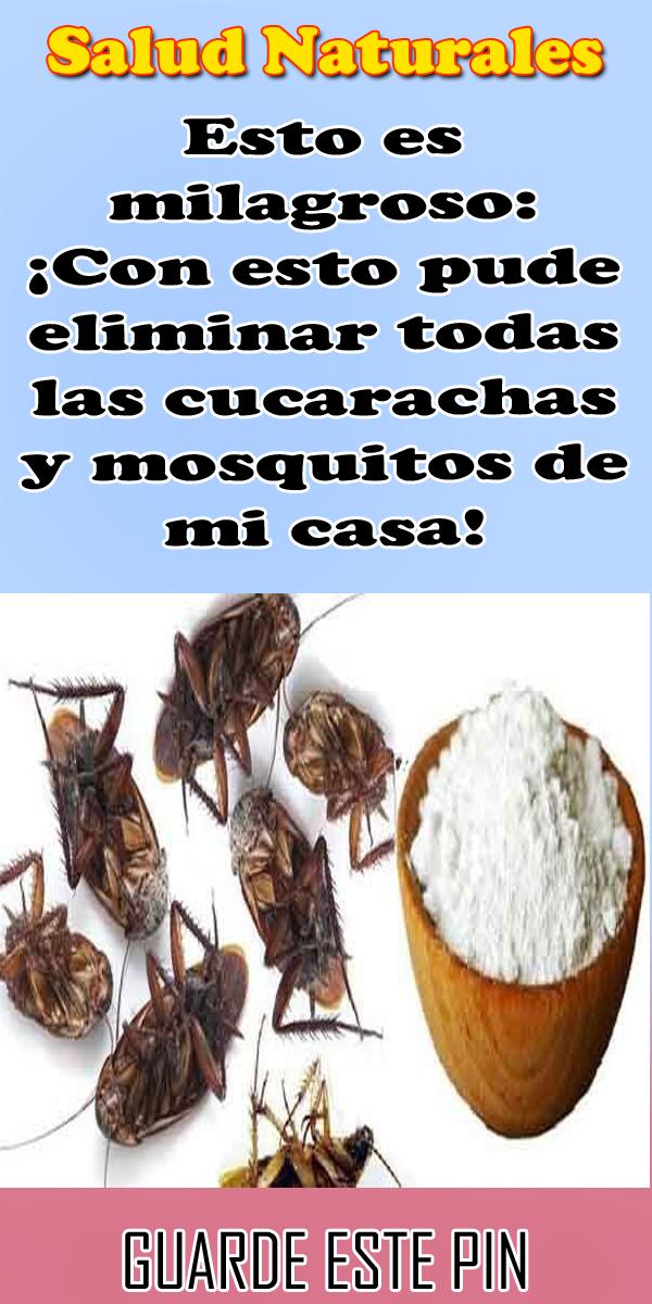 Esto Es Milagroso Con Esto Pude Eliminar Todas Las Cucarachas Y Mosquitos De Mi Casa Salud Naturales Mosquitos Cucarachas Salud Natural