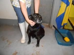 Adopt Mason On Post Animal Labrador Retriever Dog Retriever Dog