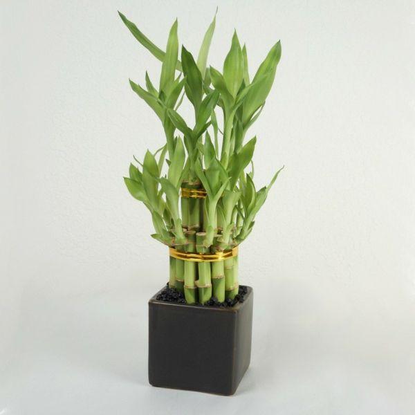 Feng Shui Pflanzen feng shui pflanzen für harmonie und positive energie im wohnraum
