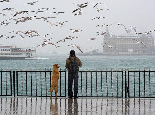 14 photos qui montrent que le chien est bien le meilleur ami de l'Homme – Deux Secondes