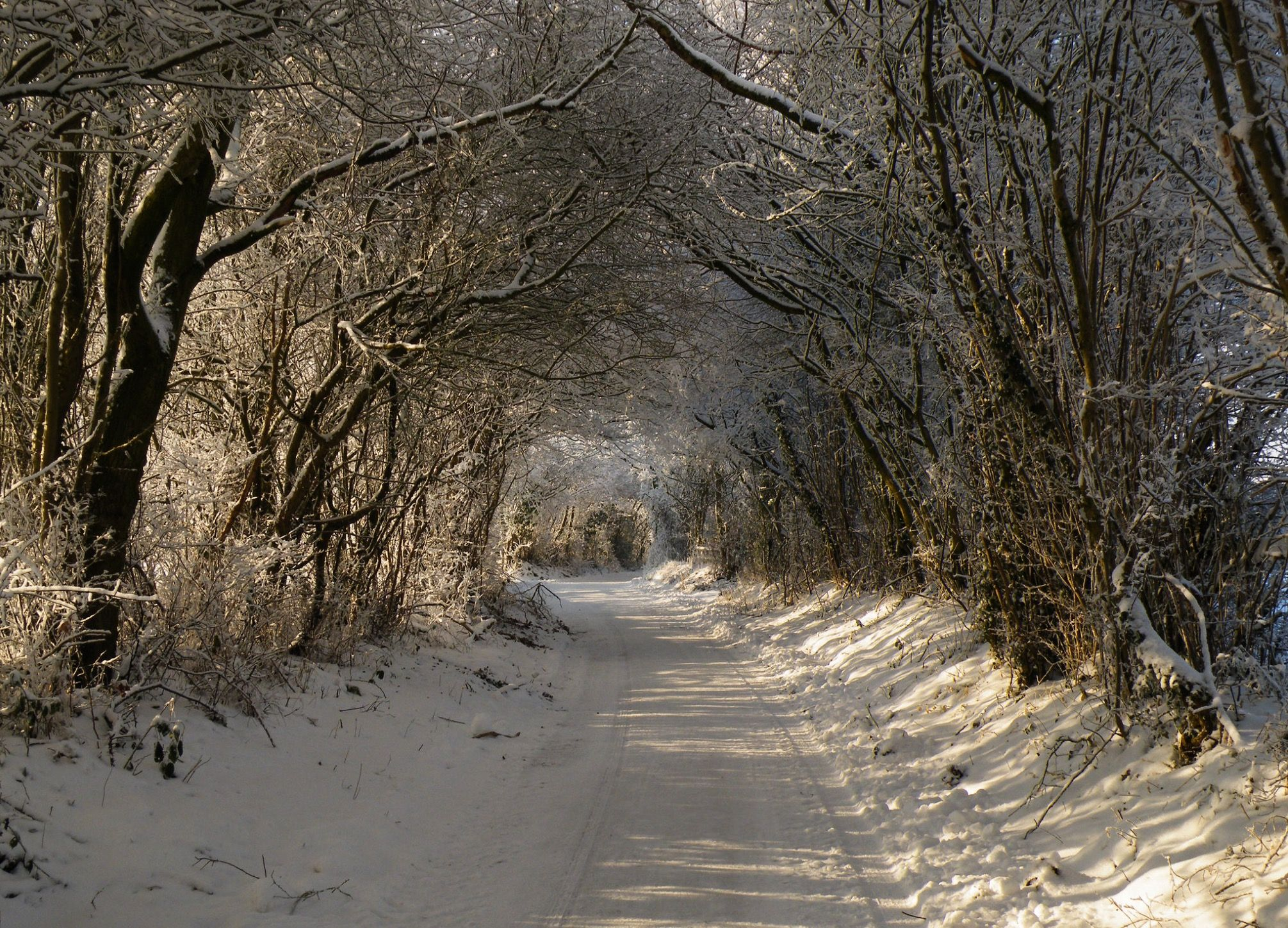 lane in winter church stoke wales uk by ros baylis paths