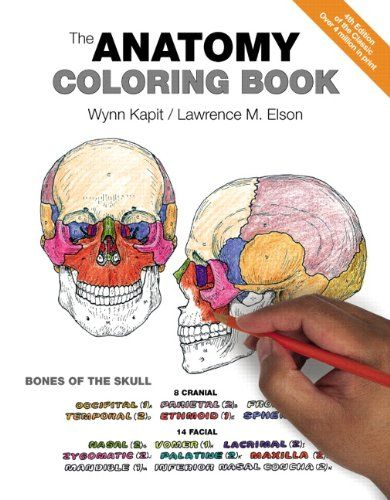 Anatomy Physiology Coloring Books | Respiratory Therapy | Pinterest ...