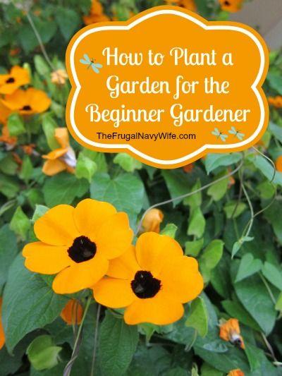 How To Plant A Garden For The Beginner Gardener 640 x 480