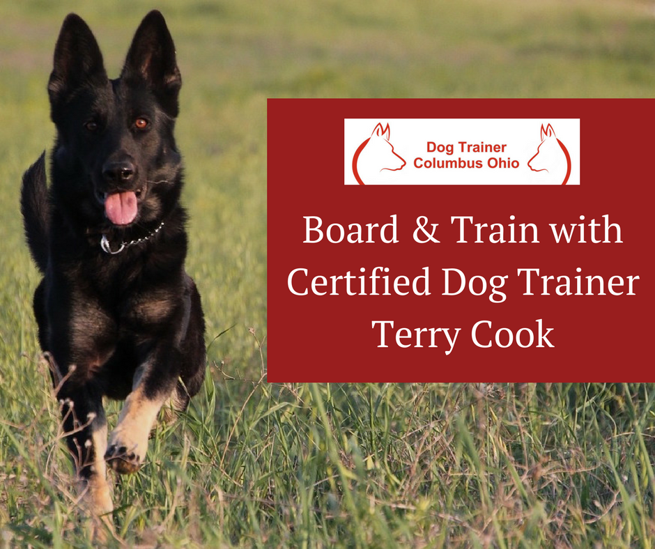 Dog Trainer Terry Cook Of Columbus Ohio Offers Dog Training And Board And Train In Columbus Ohio For Professi Dog Training Obedience Dog Trainer Dog Obedience