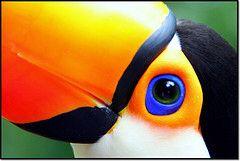 Toucan vu par Art WOLF.