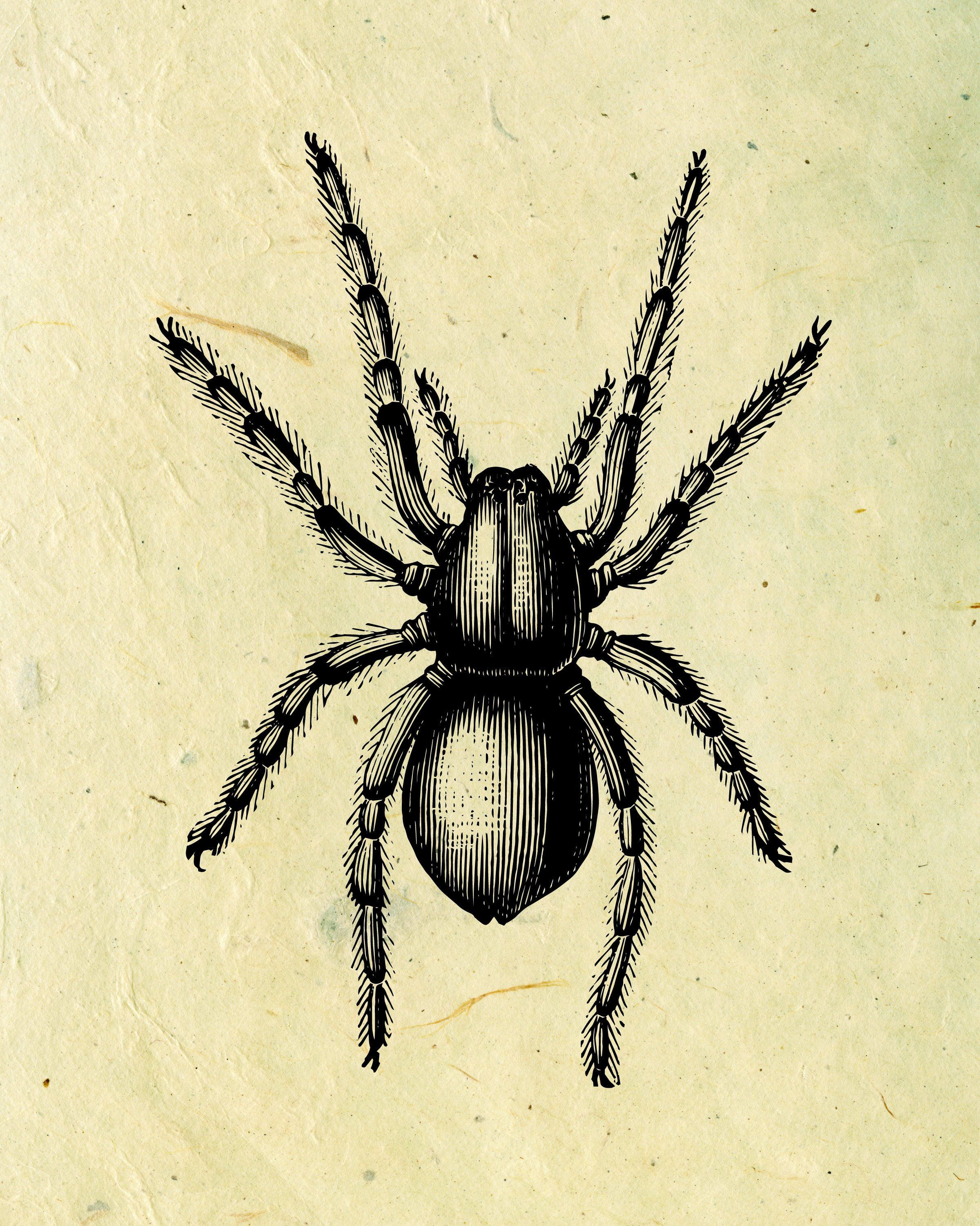 Printable Vintage Spider Print For Scary Victorian Wall
