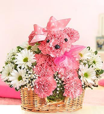 Princess Paws New Baby Flowers Beautiful Flower Arrangements Pink Carnations