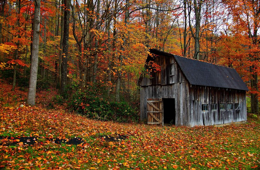 Fall foliage and countrybarn in West Virginia where peak