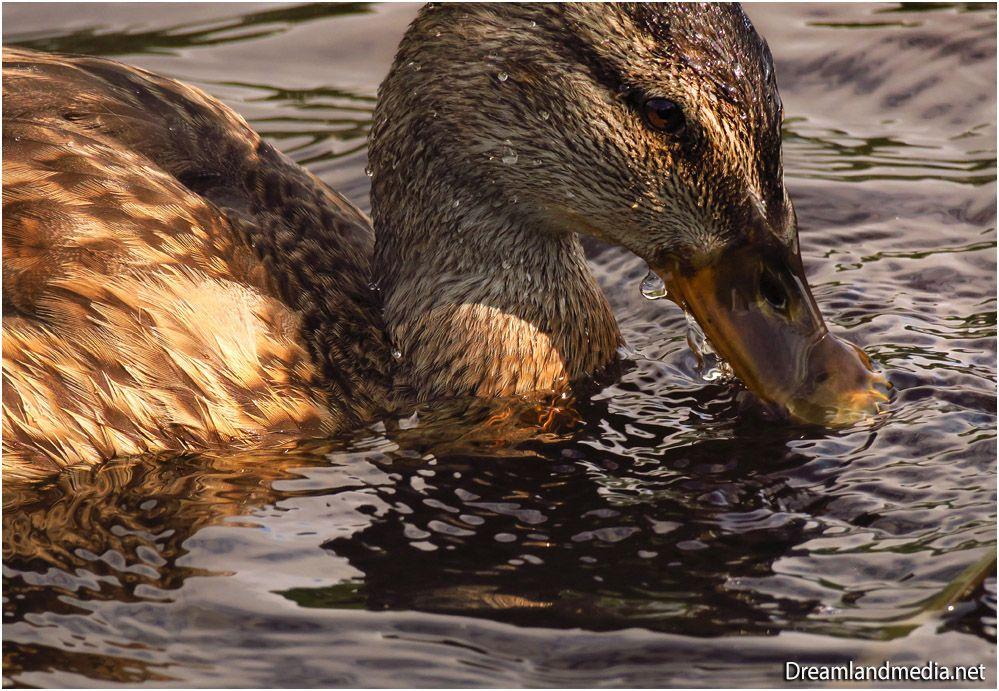 Duck Details in 2020 Macro photos, Animal photo, Animals
