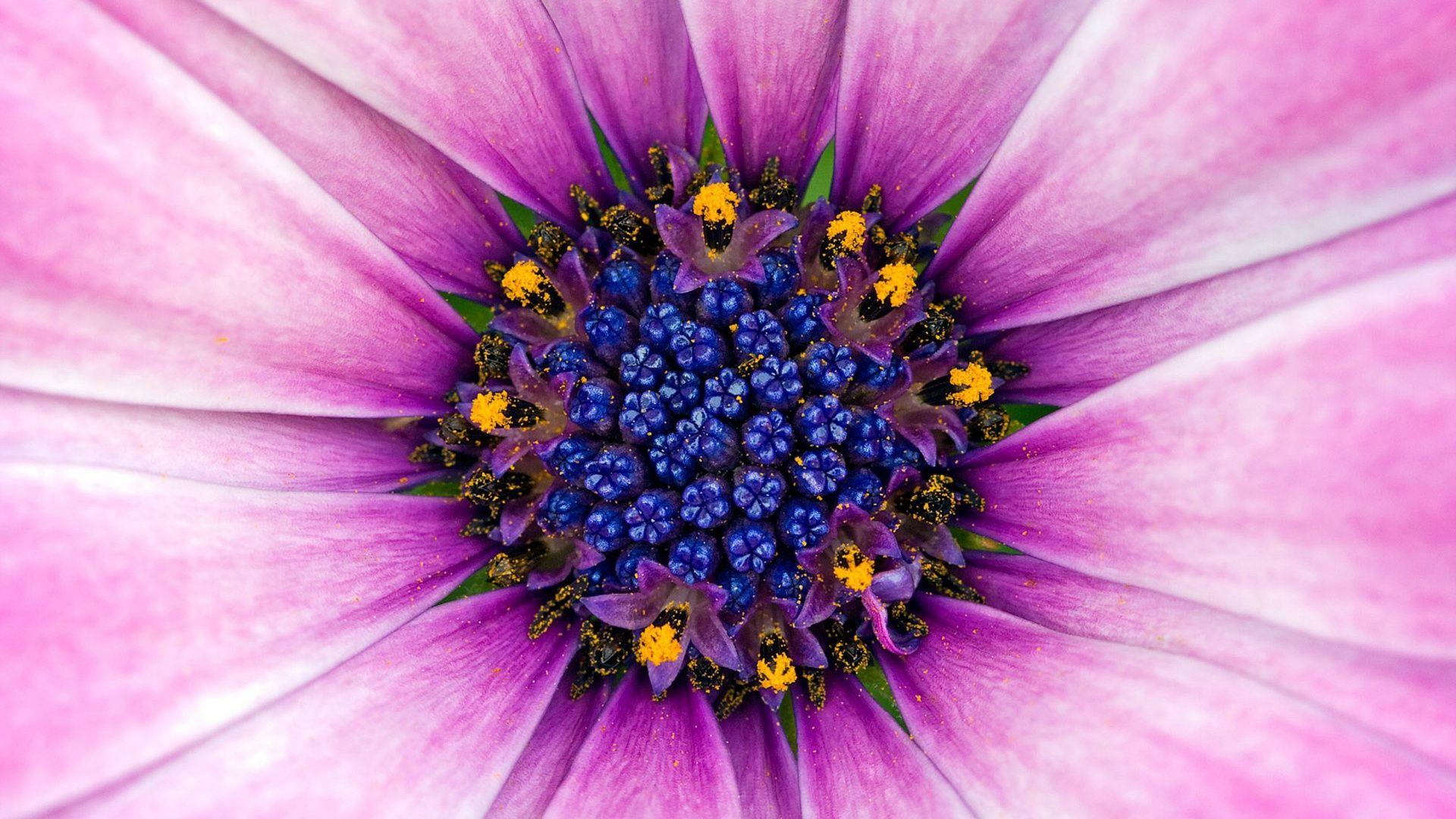 1920x1080 creative coffee flower - photo #47
