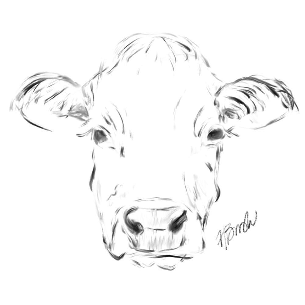 A Little Cow Sketch Because I Love Cow Faces Sketch Doodles