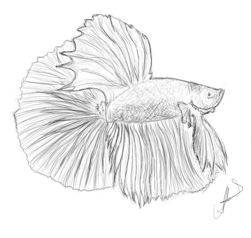 Betta Fish Drawing Google Search Betta Fish Tattoo Fish Drawings Fish Coloring Page