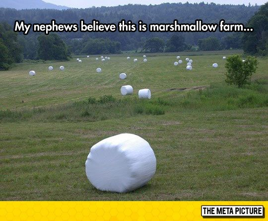 Landscape Of My Dreams Funny Pictures Funny Pictures Fails Jokes